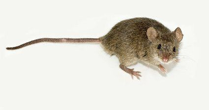 Mouse in commercial aircraft